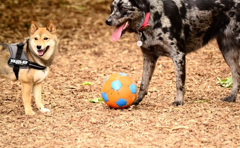 Top 5: Best walks to play with other dogs / Les meilleures promenades pour rencontrer d'autreschiens