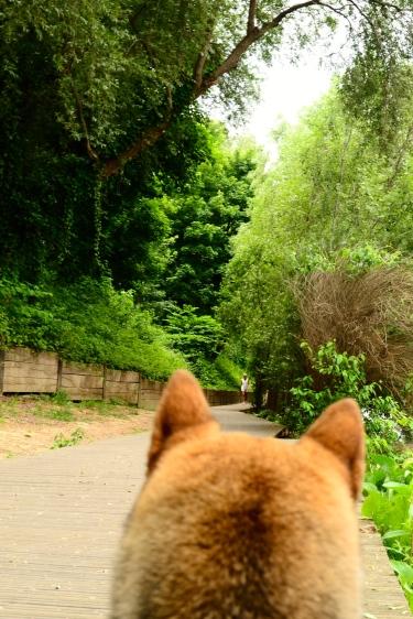 L'ile de la jatte autorisé aux chiens et son caniparc dans les yeux d'un shiba #dogperspective