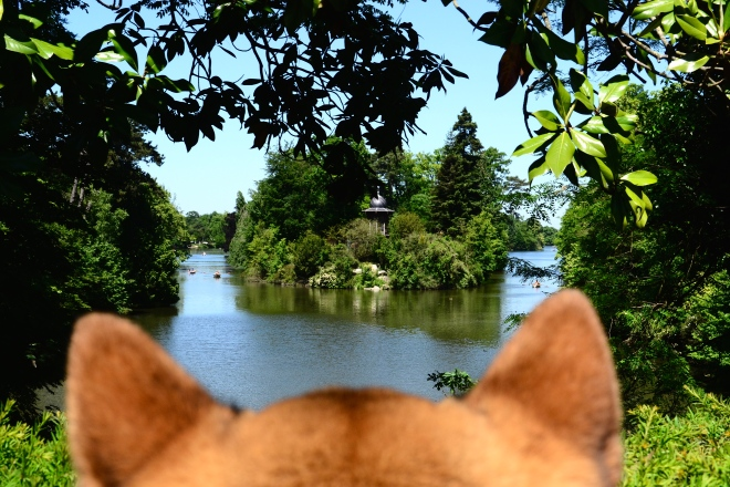 shiba dog island lake boulogne paris dog perspective