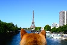 La tour eiffel depuis l'ile au cygne, autorisé aux chiens dans les yeux d'un shiba #dogperspective angle 2
