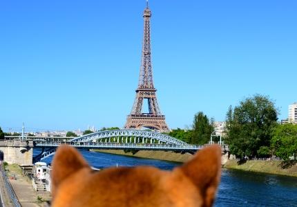 La tour eiffel depuis l'ile au cygne, autorisé aux chiens dans les yeux d'un shiba #dogperspective
