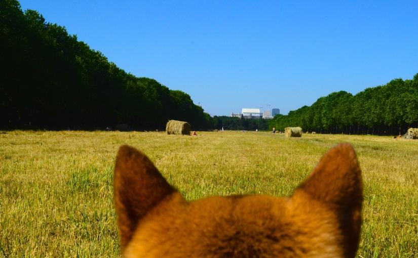 Le Bois de Vincennes, le plus grand espace de nature deParis