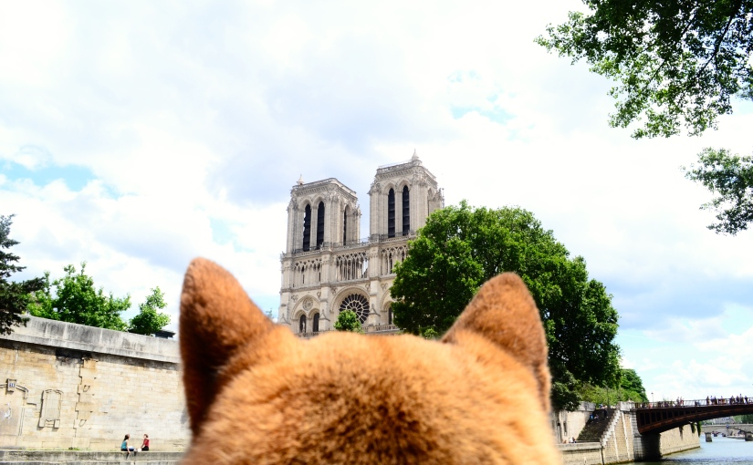 Top 5: Best walks to visit Paris with your dog / Les meilleures promenades pour visiter Paris avec votrechien
