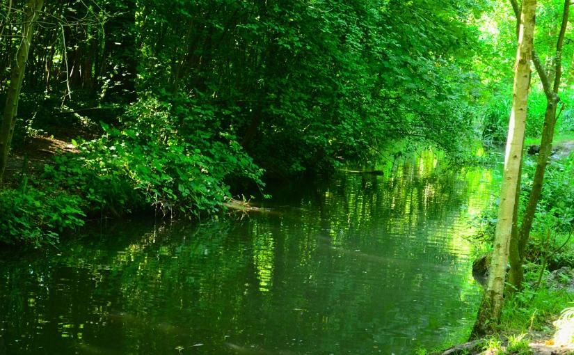 Top 5: Best walks to find nature with your dog / Les meilleures promenades pour retrouver la nature avec votrechien