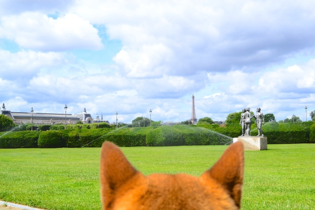 Tuileries park from a dog perspective near le Louvre