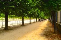 Les allées du jardin des tuilleries coté Rivoli autorisées aux chiens paysage