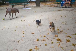 caniparc square jacques antoine denfert rochereau shiba paris chien
