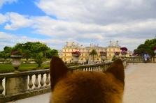 jardin du luxembourg chien dogperspective