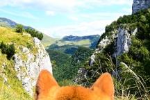 la montagne dans les yeux d'un chien