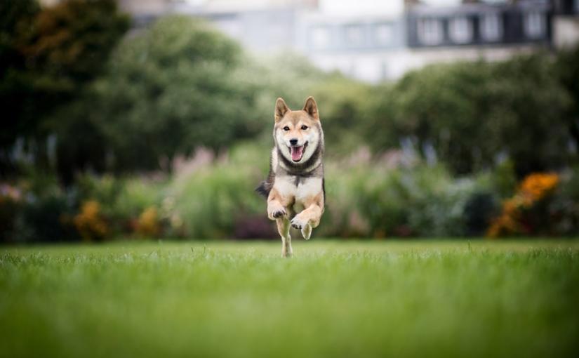 Pour une superbe séance photo de votre chien dans Paris contactez Patounes etMoustaches