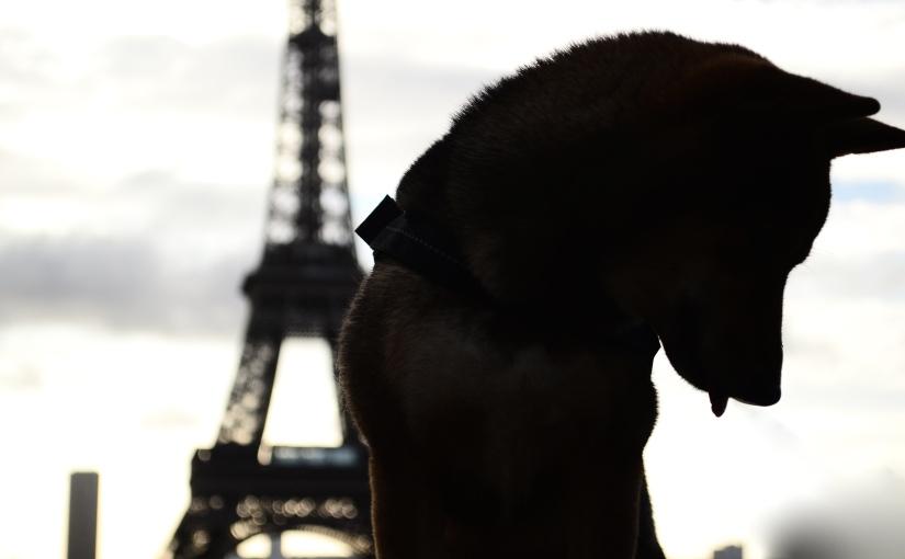 Les Jardins du Trocadéro – La balade la plusphotogénique