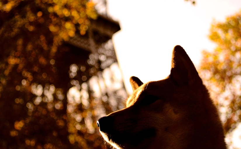 Champs de Mars – A dogfriendly walk in front of the Tour Eiffel
