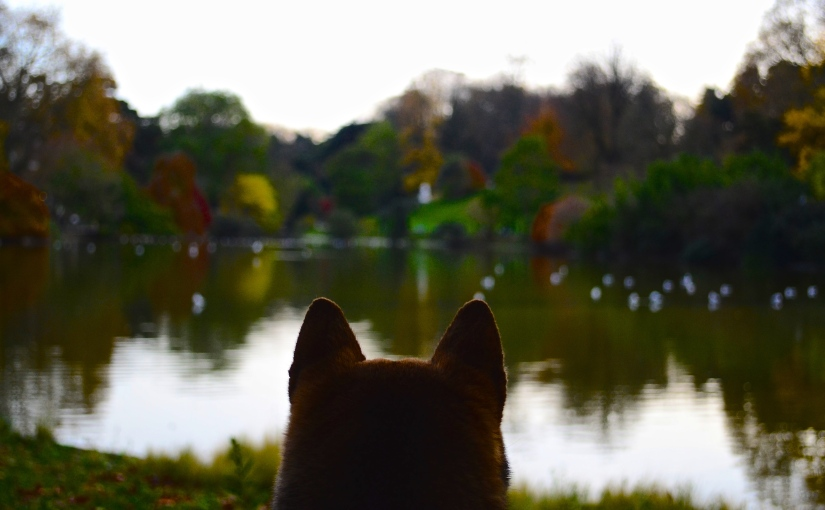 The Montsouris park, a dogfriendly haven of peace in the south of Paris