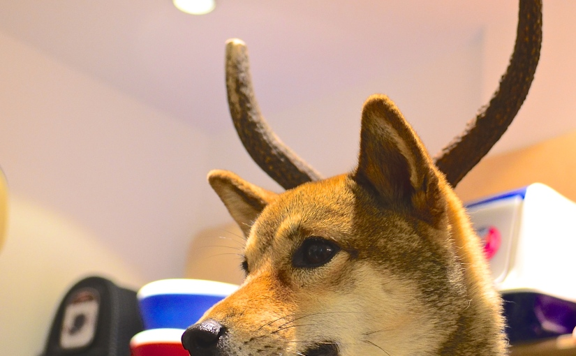 Two Tails – A new petshop in Paris that your dog willlove
