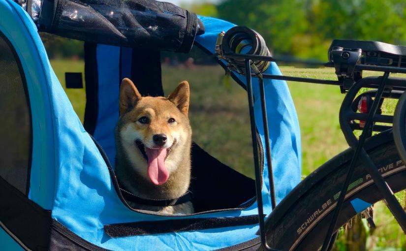 Faire du vélo avec son chien – Nos trucs etastuces